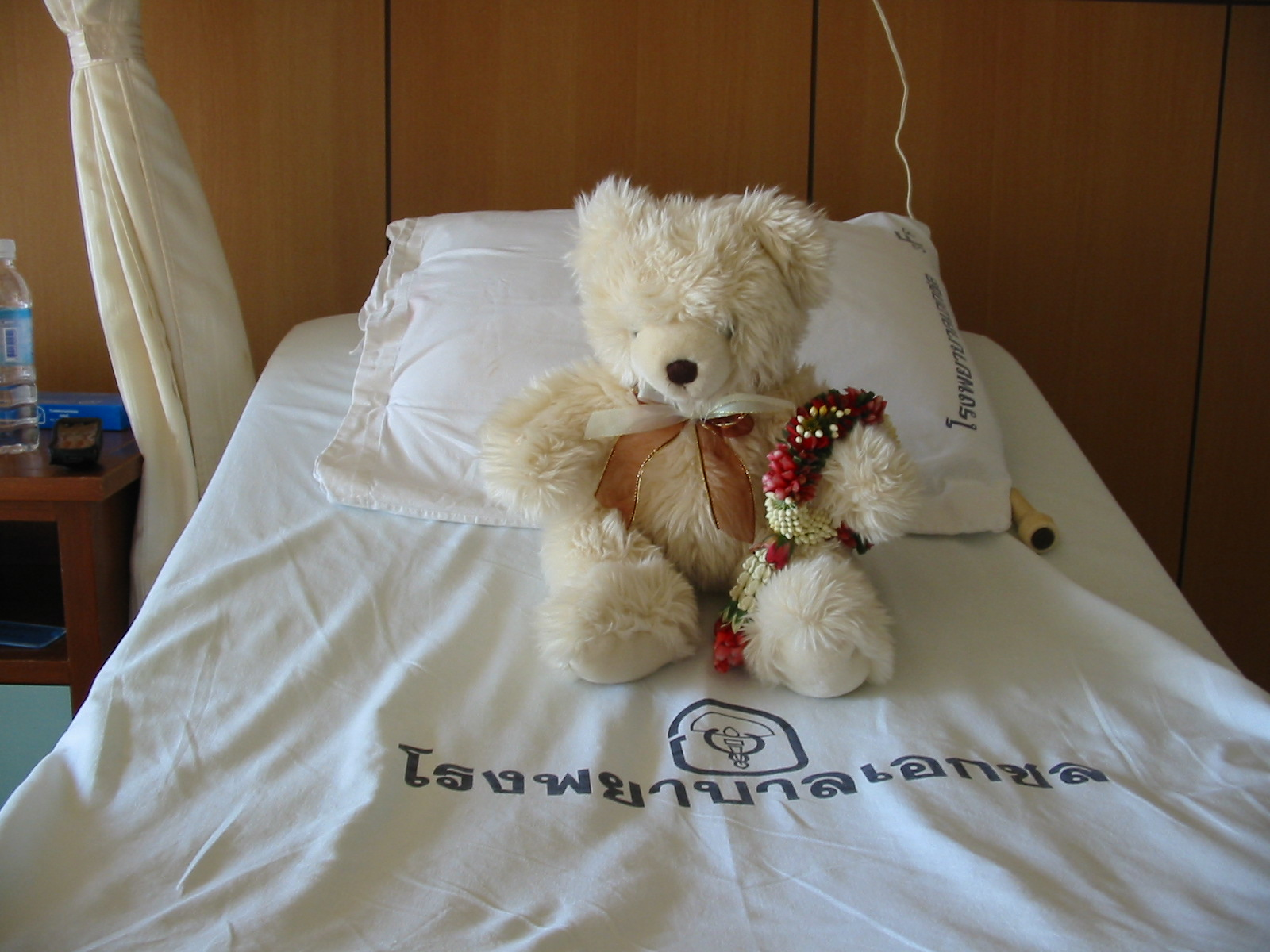 Sunrise (one of my two teddy bears) was my companion on this trip, while her boyfriend Tewkesbury looked after my room back home..